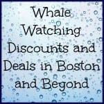 Whale Watching Boston Deals