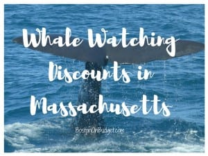 Whale Watch Discounts Boston MA