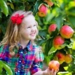 Apple & Pumpkin Picking and Farm Fun in the Greater Boston Area