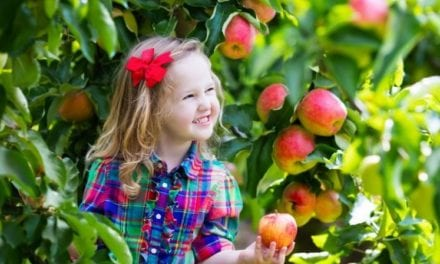 Apple Picking & Pumpkin Patch Farms in Boston – Best Farms To Pick Berries & other Fruits