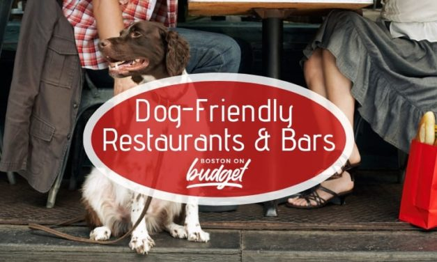The Best Dog-Friendly Bars and Restaurants in Boston