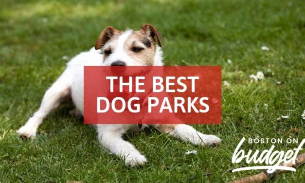 The Best Dog Parks in Boston