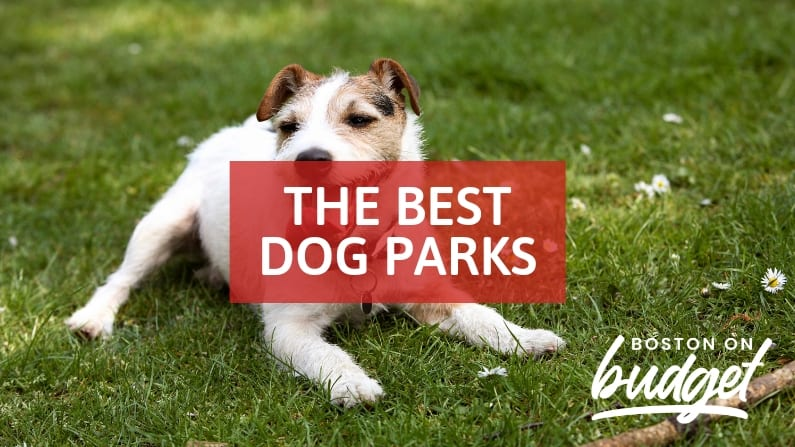 Best Dog Parks Boston