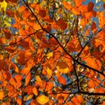 Boston Fall Foliage And Leaf Peeping Guide 2021: Best Dates, Spots in New England