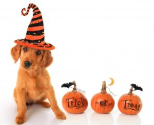 Howl-O-Ween Doggie Curise