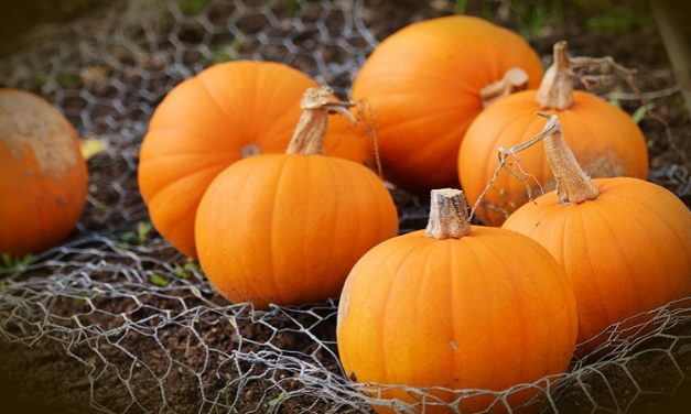 The Ultimate Guide to Boston Pumpkin Patches