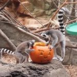Zoo Howl at Franklin Park Zoo: Dates, Hours, Discounts, and More