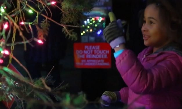 Stone Zoo Lights: Dates, Hours, Discounts, and More
