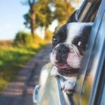 You Can Now Uber with Your Pet in Boston