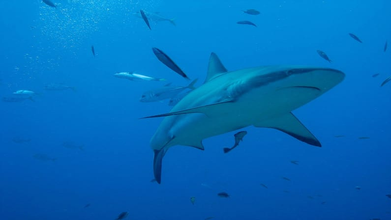 Shark Week is Here! What to Watch & When