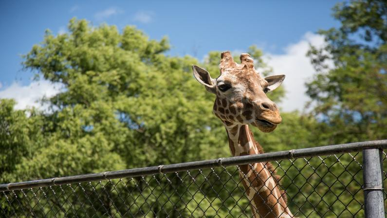 Free Admission to Zoo New England on MLK Day, Monday, January 18th