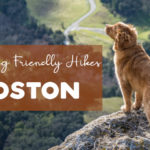 10 Dog Friendly Hiking Trails in Boston – Best Places To Hike With Pets