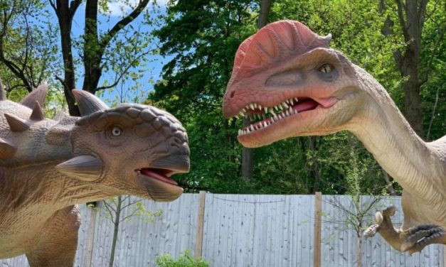 Get WILD at the Zoo – Summer 2021 Events in Boston